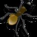 大阪に現れた「外来種 ヒアリの死骸」 猛毒アリの存在は日本中に広がるの「大量自然繁殖」を示唆するのか?