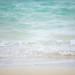 茨城の海水浴場にサメが30匹確認!? 人に無害なドチザメと専門家は判断したが遊泳禁止の処置がとられる