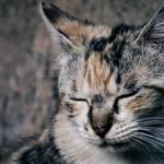 睡眠負債は「眠りの達人」である猫を見て学ぼう! 猫が快眠できる4つの不思議