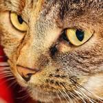 猫を飼っている人がNGなやってはいけない行動 アロマや喫煙が「猫の健康寿命」を縮めるかも!?