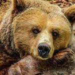 山でクマに襲われて死亡したら誰が悪いのか? 猟師が減りクマが街中を歩く現代で何が正しい?