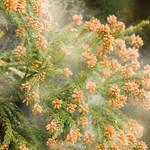 【爆笑】花粉症の原因になる植物の花言葉をまとめてみた