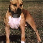 【騒ぐ野生の血】ペットの犬が飼い主2人を殺害?自宅に血だらけの遺体