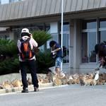 【朗報】ウサギの島、世界的に有名になる!新しい村おこしの指標か