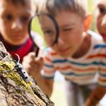 2018年夏、子ども喜ぶカブトムシ&クワガタ「昆虫イベント」開催!過去の人気展覧会なども