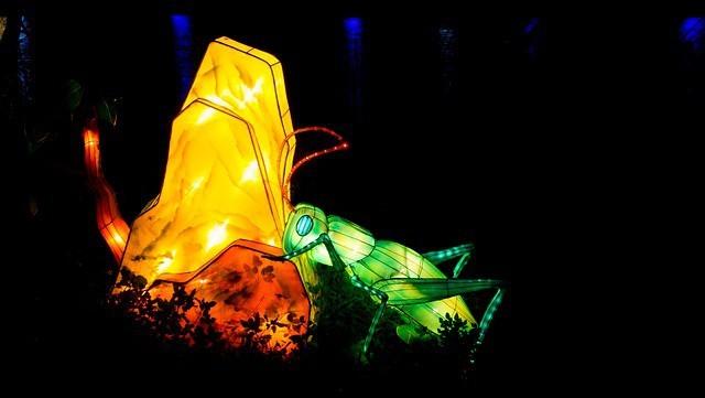 Free photo: Lantern Festival, Chinese New Year - Free Image on Pixabay - 663956 (342)