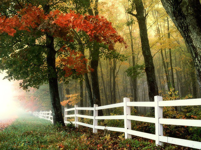 Free photo: Early Morning, Autumn, Fall, Forest - Free Image on Pixabay - 299735 (731)