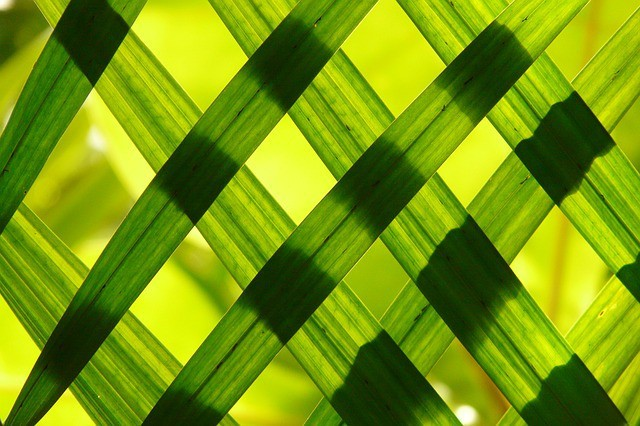 Free photo: Leaves, Green, Shadow Play - Free Image on Pixabay - 108969 (764)
