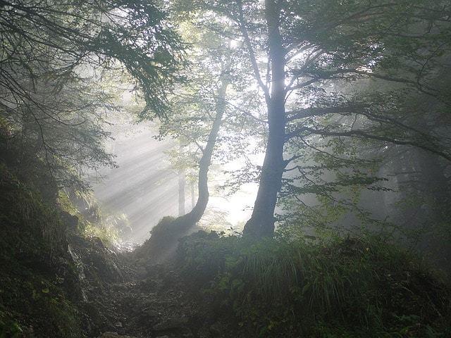 Free photo: Rise, Morning, Fog, Sunbeam - Free Image on Pixabay - 1503340 (1310)