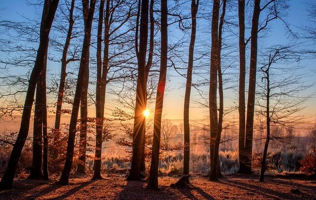 Free photo: Forest, Landscape, Sun, Trees - Free Image on Pixabay - 1950402 (1440)