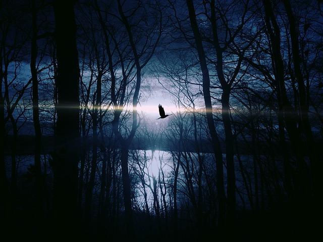 Free photo: Bird, Fly, Gespentisch, Night - Free Image on Pixabay - 383245 (1628)