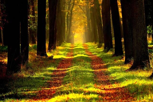 Free photo: Forest, Vista, Tour - Free Image on Pixabay - 868715 (2340)