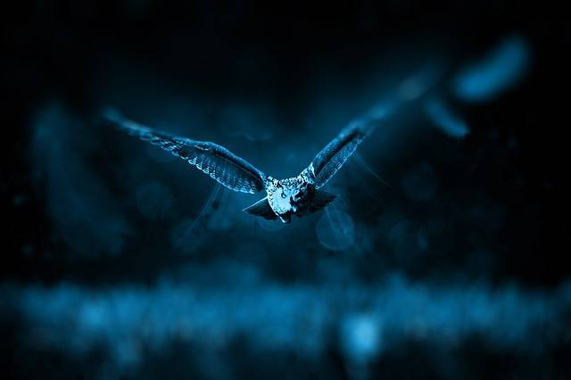 Free photo: Owl, Hunt, Nature, Hunter, Predator - Free Image on Pixabay - 518838 (3323)