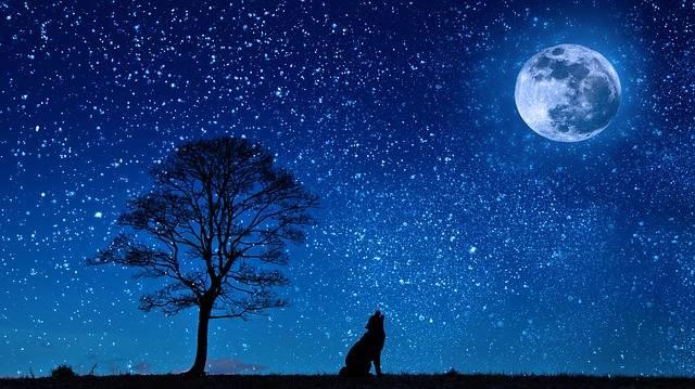 Free illustration: Dog, Wolf, Yelp, Moon, Tree, Night - Free Image on Pixabay - 647528 (3324)