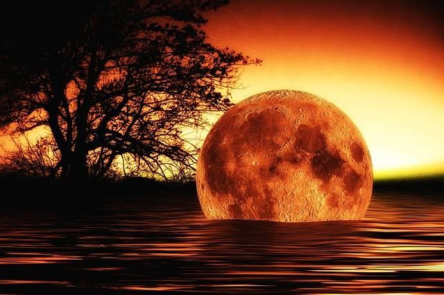Free illustration: Water, Wave, Moon, Tree, Mirroring - Free Image on Pixabay - 209901 (5394)
