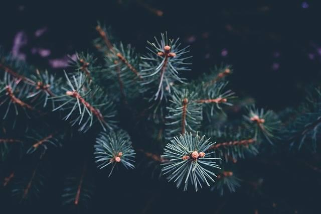 Free photo: Branch, Celebration, Christmas - Free Image on Pixabay - 1869994 (5402)