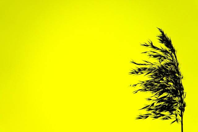 Free photo: Silhouette, Black, Yellow, Color - Free Image on Pixabay - 1908626 (8571)