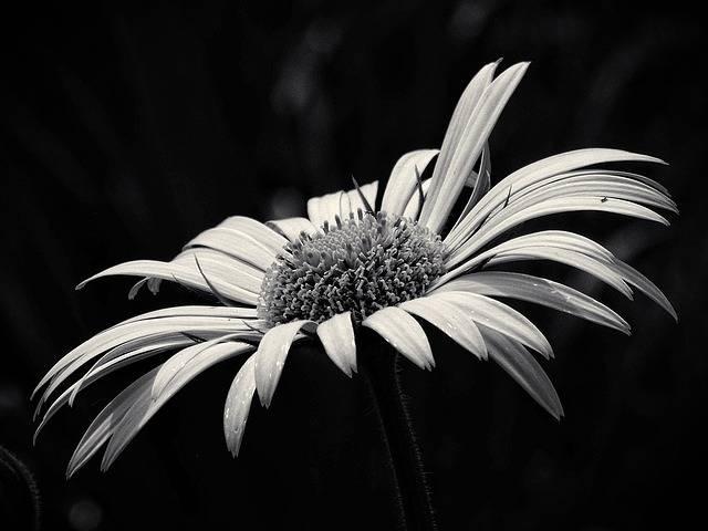 Free photo: Beauty, Yellow Flower - Free Image on Pixabay - 1412129 (11031)