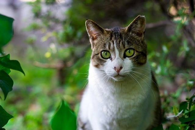 Free photo: Cat, Tokyo, Japan, Japanese, Asia - Free Image on Pixabay - 725793 (11050)