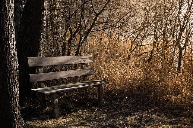 Free photo: Bench, Bank, Seat, Nature, Out - Free Image on Pixabay - 1190768 (11335)