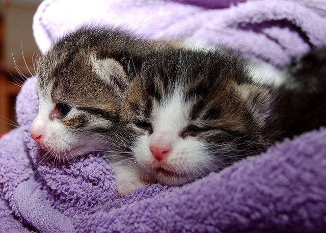 Free photo: Cat, Young Cat, Playful, Pet - Free Image on Pixabay - 205757 (12170)