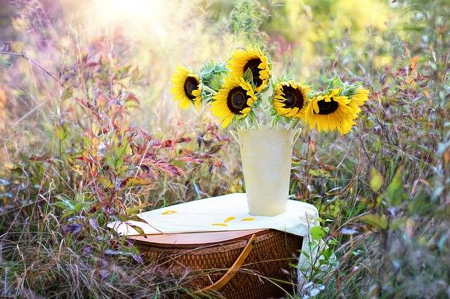 Free photo: Sunflowers, Vase, Fall, Autumn - Free Image on Pixabay - 1719119 (12637)