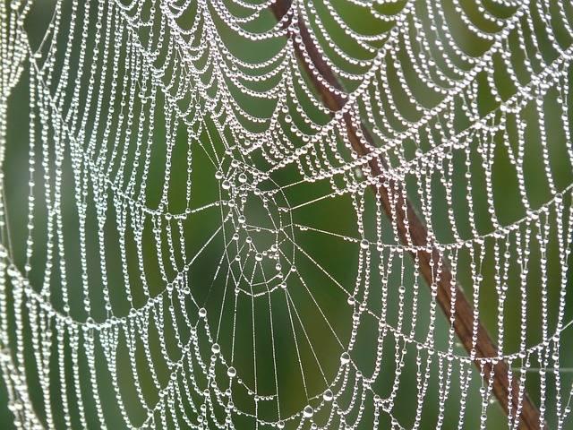 Free photo: Cobweb, Morgentau, Dew, Dewdrop - Free Image on Pixabay - 4191 (12862)