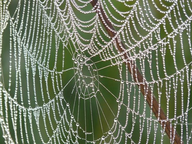 Free photo: Cobweb, Morgentau, Dew, Dewdrop - Free Image on Pixabay - 4191 (12862)