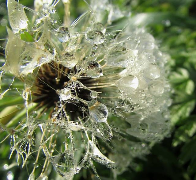 Free photo: Dew Drops On Flower, Dewdrop - Free Image on Pixabay - 210011 (13502)