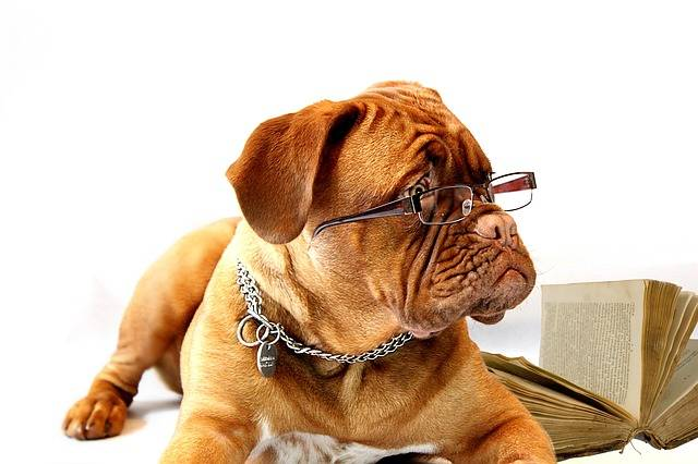 Free photo: Dog, Dogue De Bordeaux, Mastiff - Free Image on Pixabay - 734689 (14528)