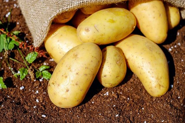 Free photo: Potatoes, Vegetables, Erdfrucht - Free Image on Pixabay - 1585075 (16708)