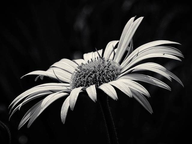 Free photo: Beauty, Yellow Flower - Free Image on Pixabay - 1412129 (18195)