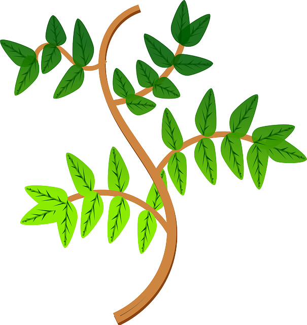 Free vector graphic: Leaves, Branch, Leaf, Green, Plant - Free Image on Pixabay - 160960 (20305)