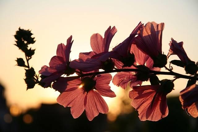Free photo: Flower, Sun, Spring - Free Image on Pixabay - 646127 (20987)