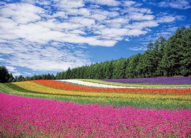 Free photo: Flower Garden, Blue Sky, Hokkaido - Free Image on Pixabay - 250016 (21257)