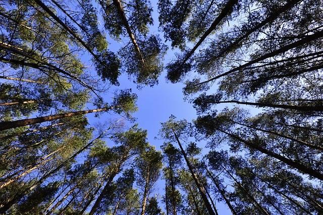 Free photo: Forests, Sky, Foliage - Free Image on Pixabay - 231066 (24941)