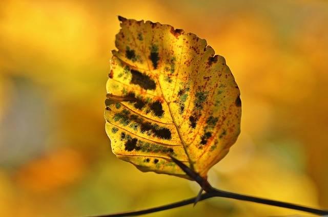 Free photo: Autumn, Fall Foliage, Leaves - Free Image on Pixabay - 1042349 (27280)