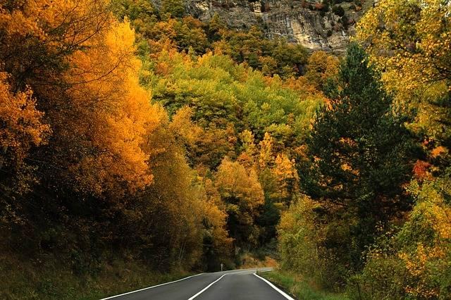 Free photo: Forest, Trees, Autumn, Nature, Road - Free Image on Pixabay - 2353236 (33419)