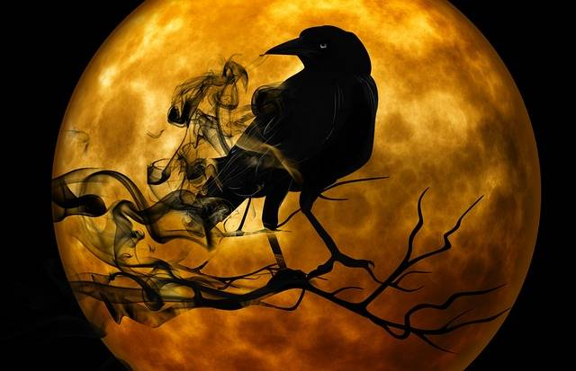 Free illustration: Raven, Crow, Night, Creepy - Free Image on Pixabay - 988218 (36688)