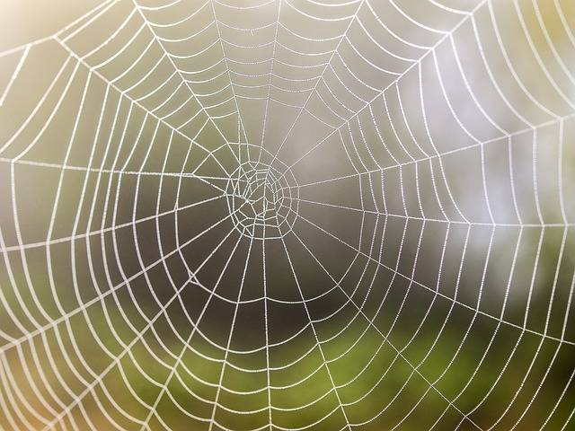 Free photo: Cobweb, Nature, Spider - Free Image on Pixabay - 2386310 (36842)