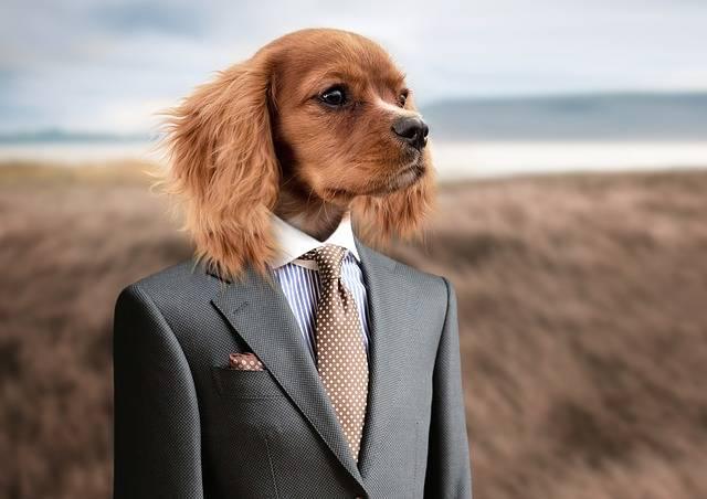 Free photo: Dog, Puppy, Young Dog, Cute - Free Image on Pixabay - 2467149 (40160)