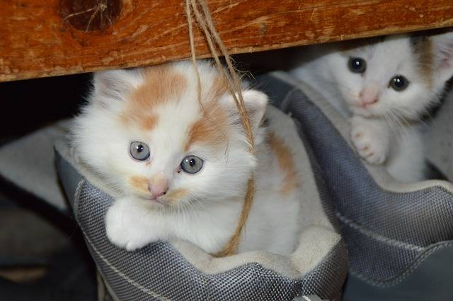 Free photo: Cat, Pets, Cat'S Eyes, Mieze, Dear - Free Image on Pixabay - 451377 (41150)