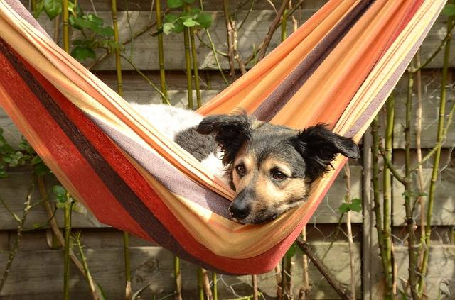 Free photo: Dog, Stabij, Frieze, Pet, Hammock - Free Image on Pixabay - 1543634 (42890)