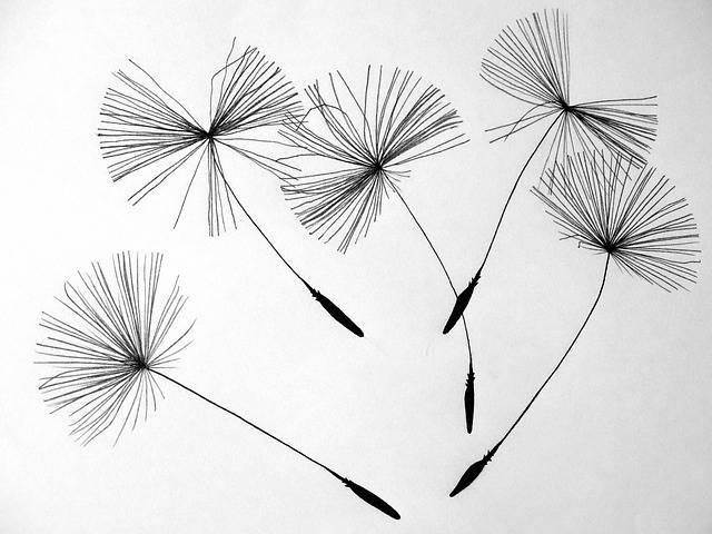Free photo: Seeds, Dandelion, Flower - Free Image on Pixabay - 641520 (43502)
