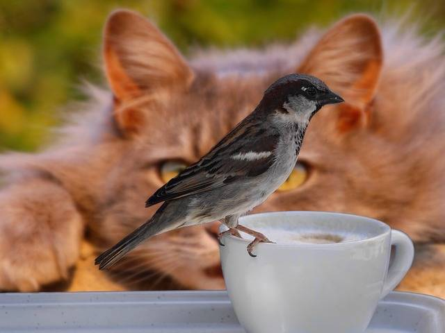 Free photo: Sparrow, Bird, Coffee, Cup, Cat - Free Image on Pixabay - 2615761 (44475)