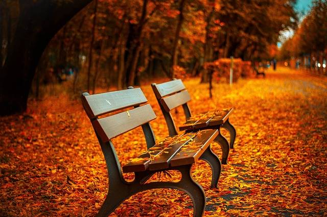 Free photo: Bench, Fall, Park, Rest, Sit - Free Image on Pixabay - 560435 (44484)