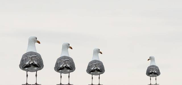 Free photo: Gulls, Fun Photo, Background Image - Free Image on Pixabay - 2662550 (46215)