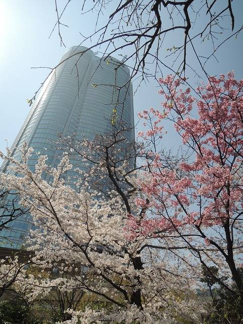 Free photo: Cherry, Roppongi Hills - Free Image on Pixabay - 2320228 (46298)