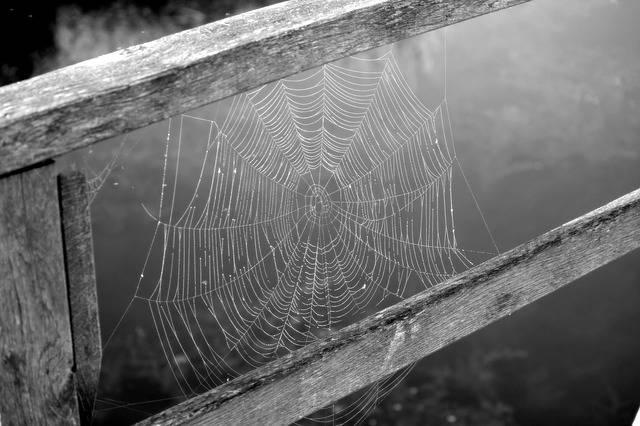 Free photo: Cobweb, Network, Black And White - Free Image on Pixabay - 1576310 (48897)