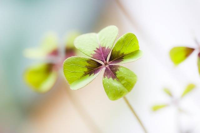 Free photo: Klee, Lucky Clover, Luck - Free Image on Pixabay - 688836 (48959)